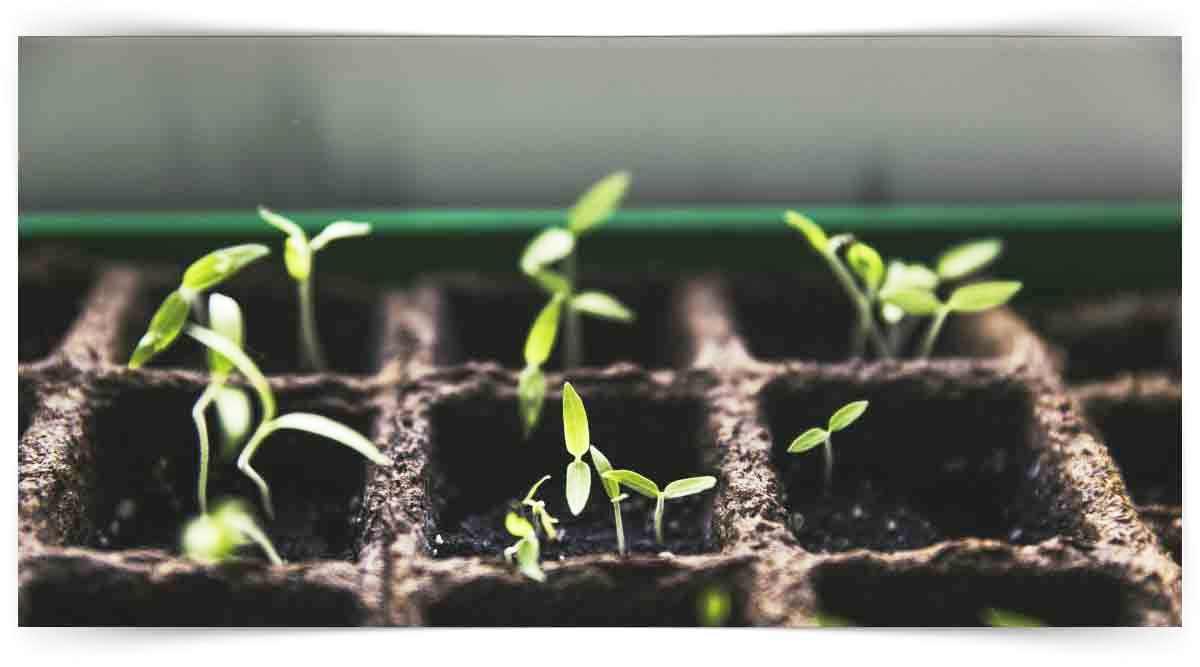 Açık Tohumlu Bitkilerin Yetiştiriciliği Kursu MEB Onaylı