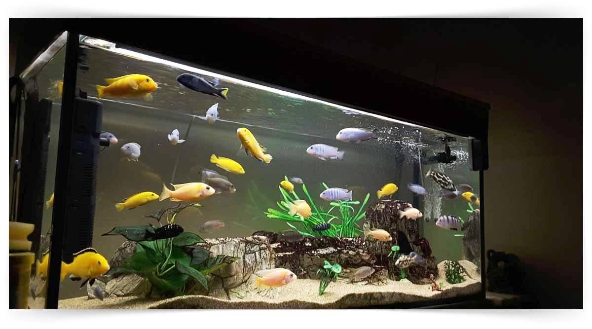 Akvaryum Balıkları Yetiştiriciliği Kursu MEB Onaylı