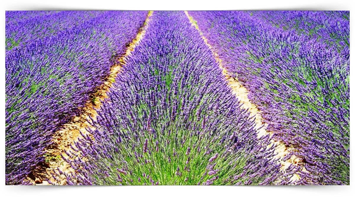 Aromatik Bitki Yetiştiriciliği Kursu MEB Onaylı