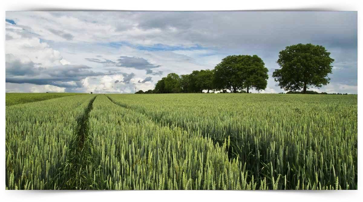 Baklagil Yem Bitkileri Yetiştiriciliği Kursu MEB Onaylı