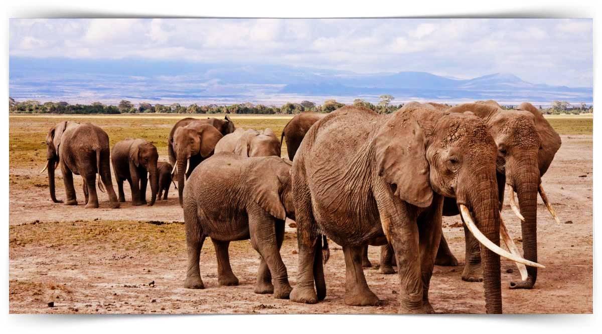Başıboş Hayvanlara Yaklaşma Ve Müdahale Teknikleri Kursu MEB Onaylı