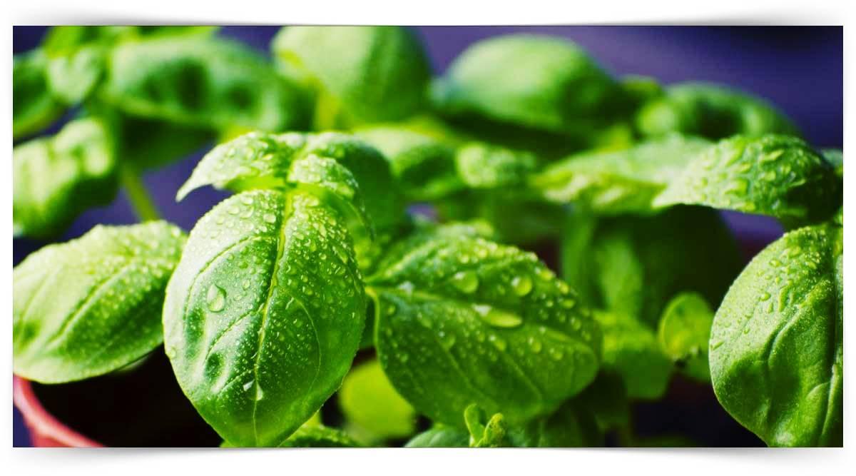Bileşik Çiçekli Sebzeler Yetiştiriciliği Kursu MEB Onaylı