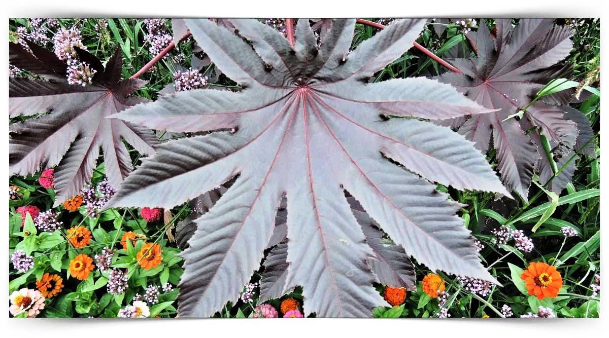 Bitki Zararlıları İle Mücadele Kursu MEB Onaylı