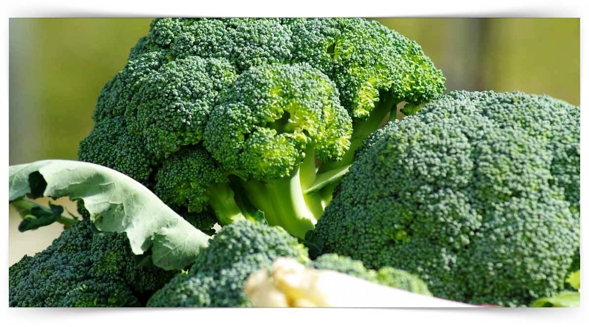 Brokoli Yetiştiriciliği Kursu MEB Onaylı