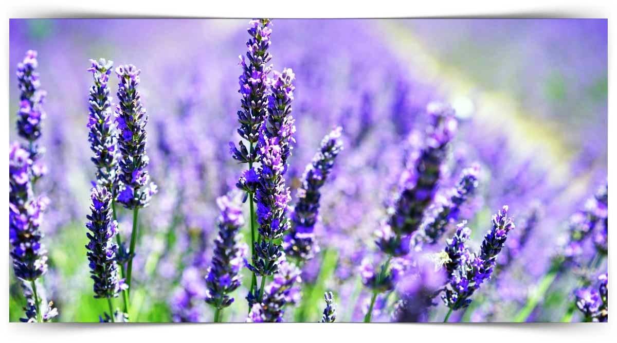 Çayır Mera Ve Yem Bitkileri Yetiştiriciliği Kursu MEB Onaylı