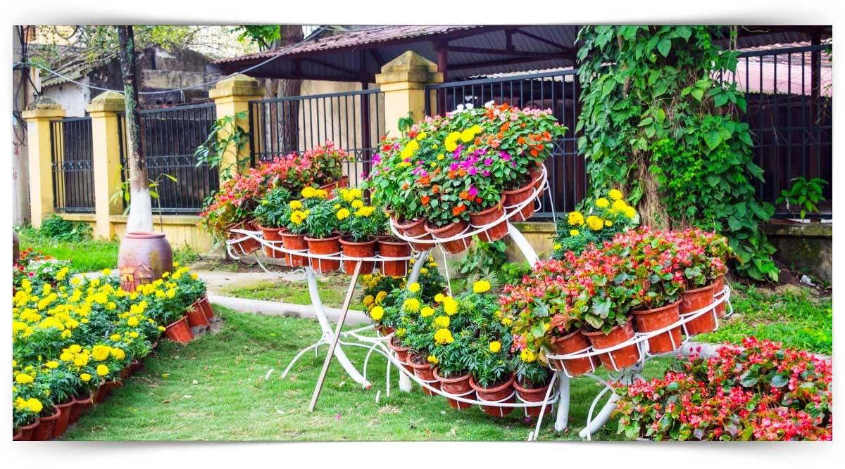 Çiçekleri Gösterişli İç Mekân Süs Bitkileri Yetiştiriciliği Kursu MEB Onaylı