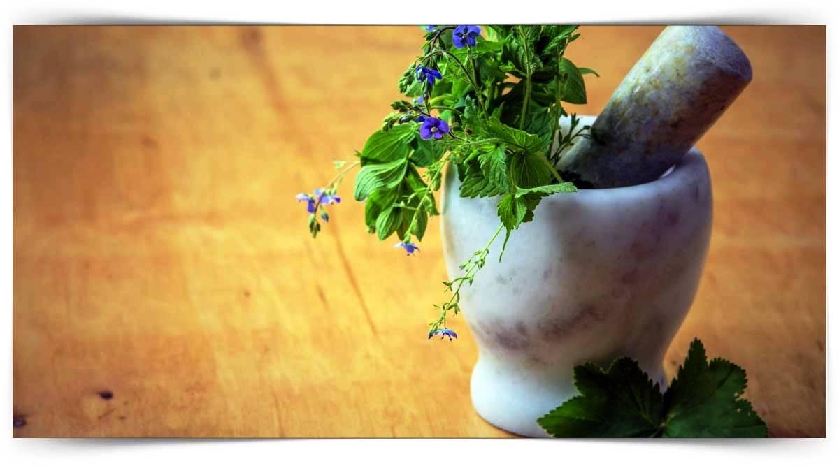 Çiçeklerinden Faydalanılan İlaç Ve Baharat Bitkileri Yetiştiriciliği Kursu MEB Onaylı
