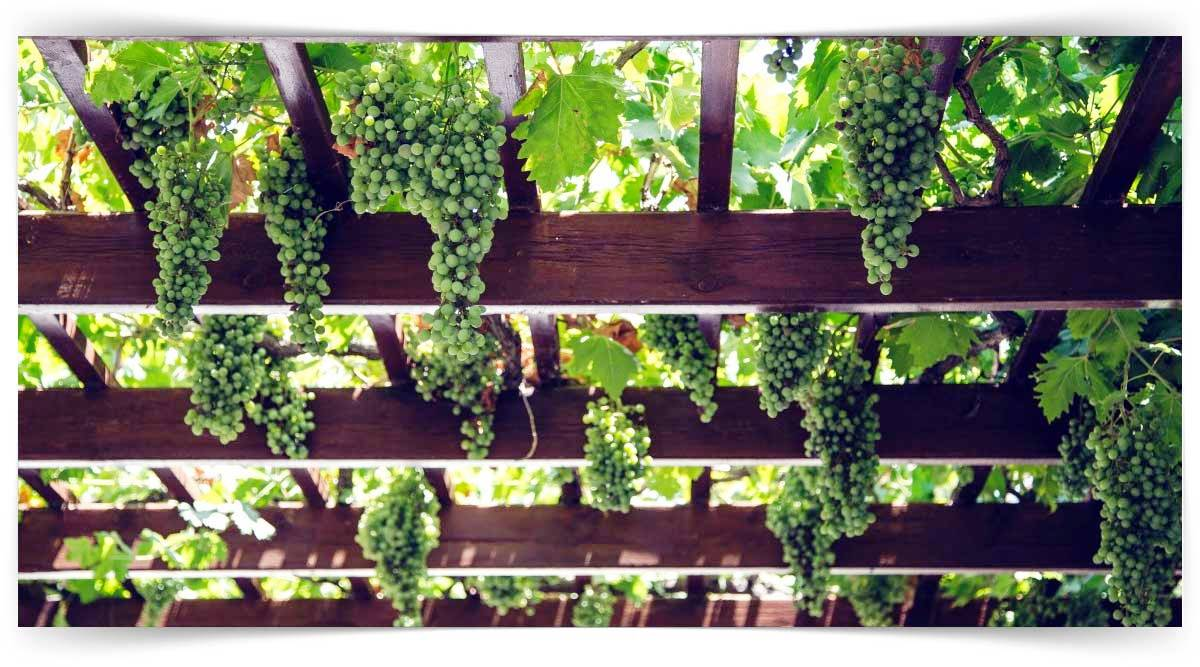 Çit Bitkileri Yetiştiriciliği Kursu MEB Onaylı