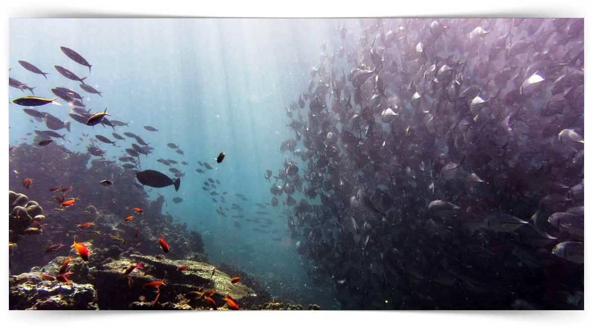 Deniz Balıkları Üreticisi Kursu MEB Onaylı
