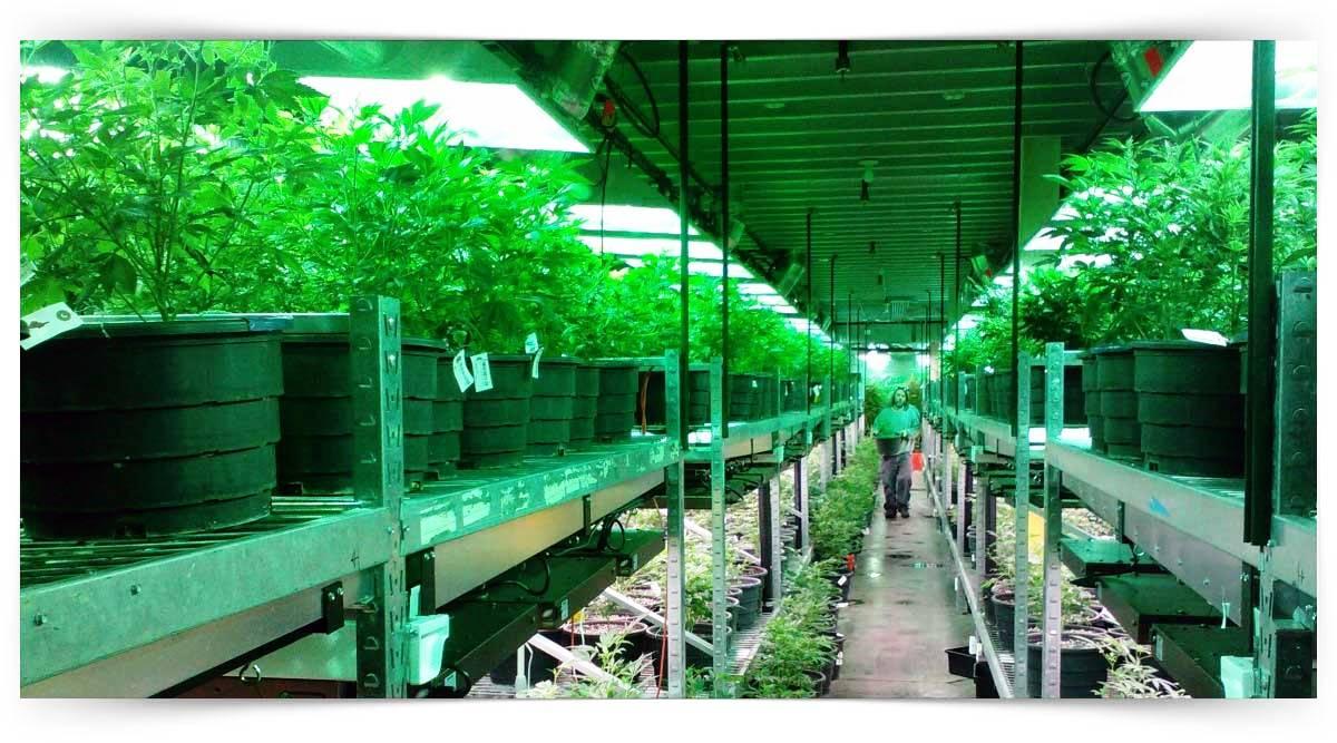 Dış Mekan Bitkileri Yetiştiricisi Kursu MEB Onaylı