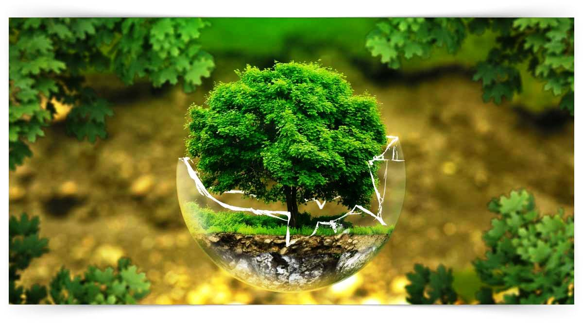 Ekoloji Kursu MEB Onaylı