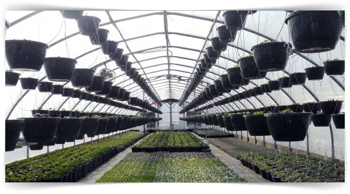 Endüstri Bitkileri Yetiştiriciliği Kursu MEB Onaylı