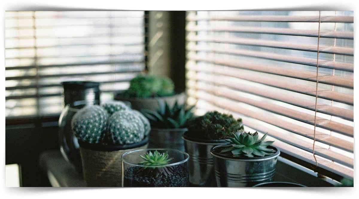 İç Mekân Bitkileri Yetiştiricisi Kursu MEB Onaylı