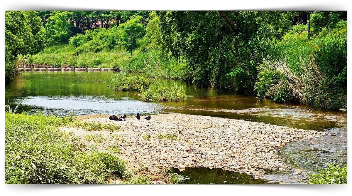 İç Su Canlıları Balıkları Yetiştiriciliği Kursu MEB Onaylı