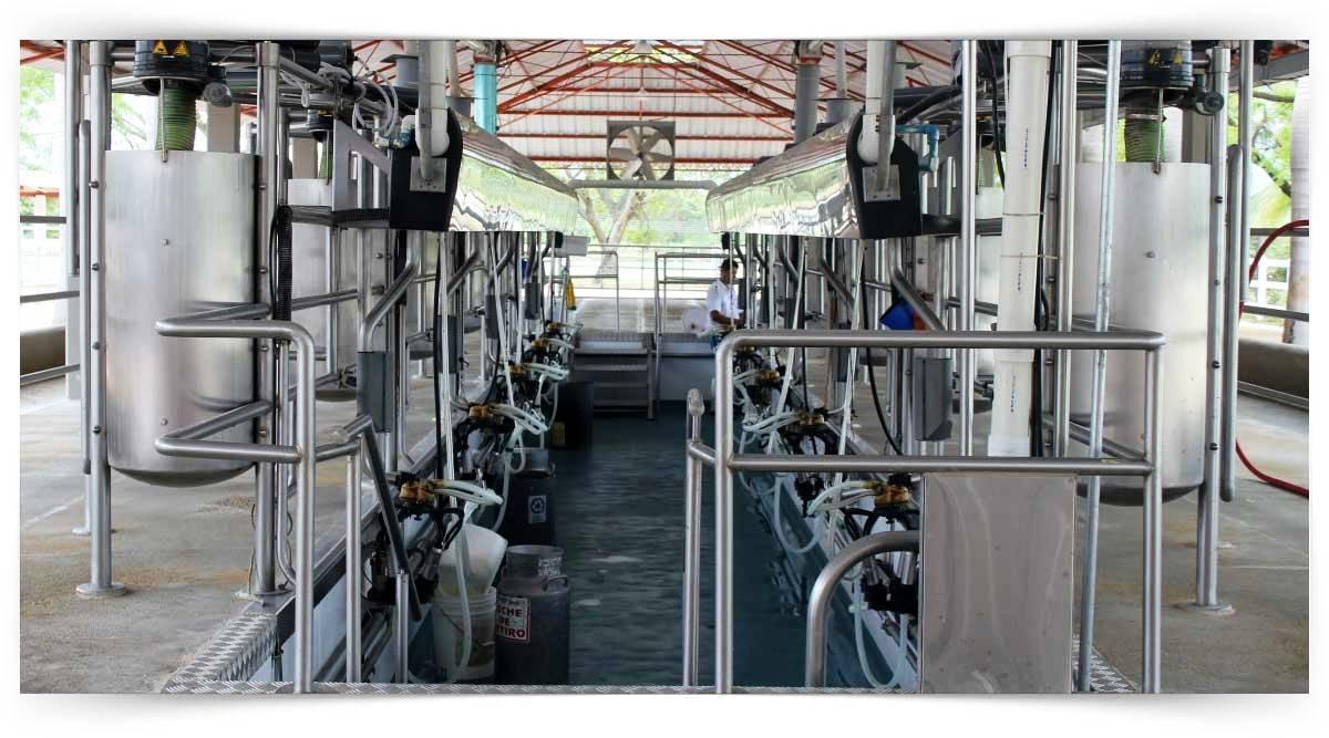 İçme Sütü İşleme Elemanı Kursu MEB Onaylı