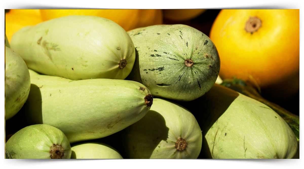 Kabakgil Sebzeler Yetiştiriciliği Kursu MEB Onaylı
