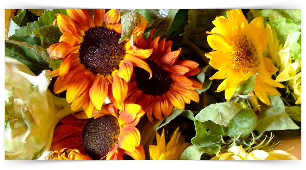 Kapalı Tohumlu Bitkilerin Yetiştiriciliği Kursu MEB Onaylı