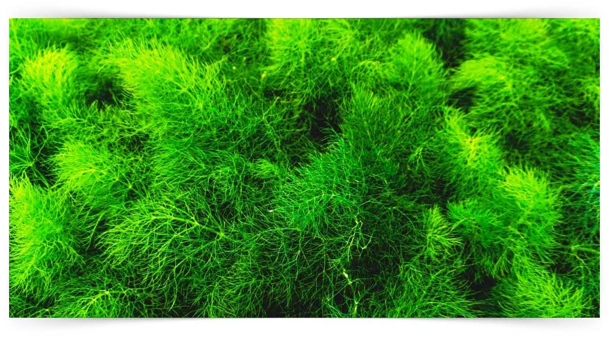 Kesme Yeşillik Yetiştiriciliği Kursu MEB Onaylı