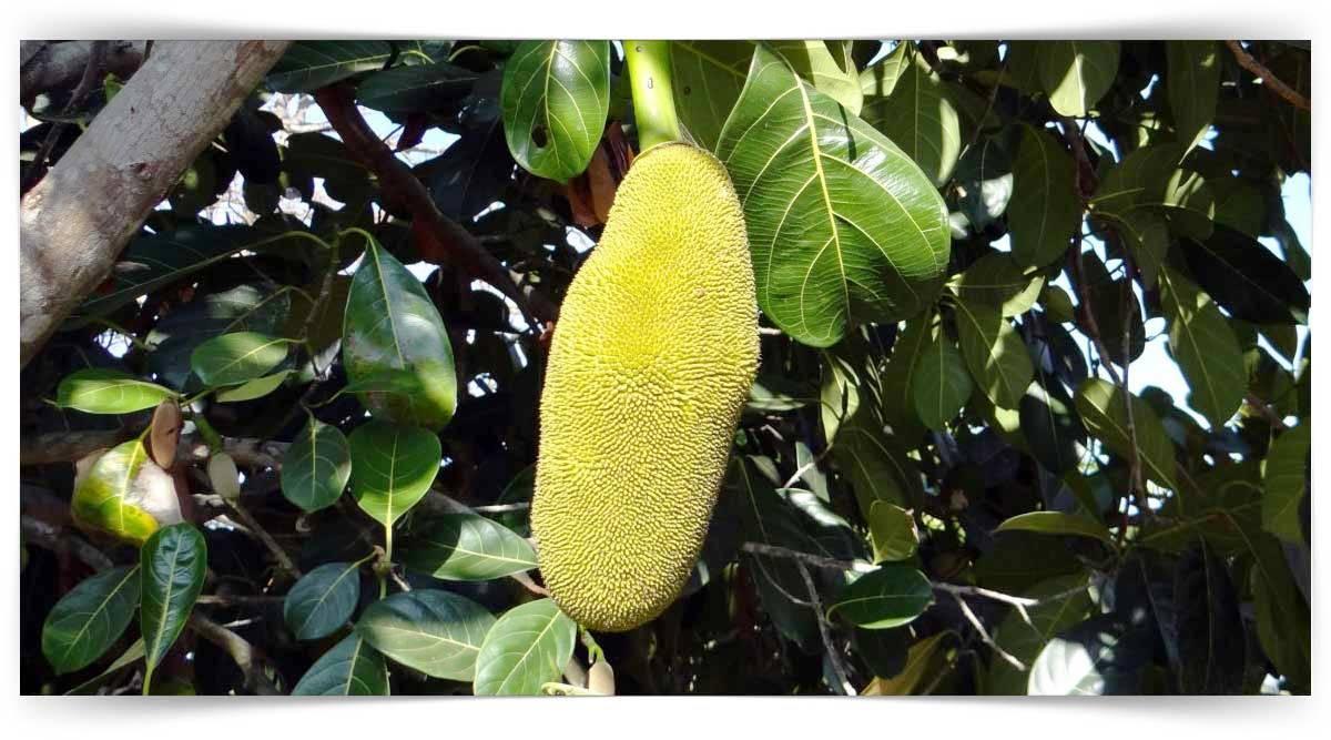 Lif Bitkileri Yetiştiriciliği Kursu MEB Onaylı