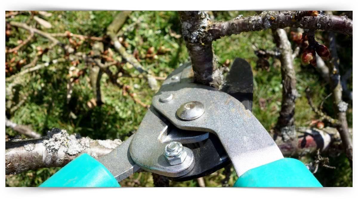Meyve Ağaçlarında Budama Kursu MEB Onaylı