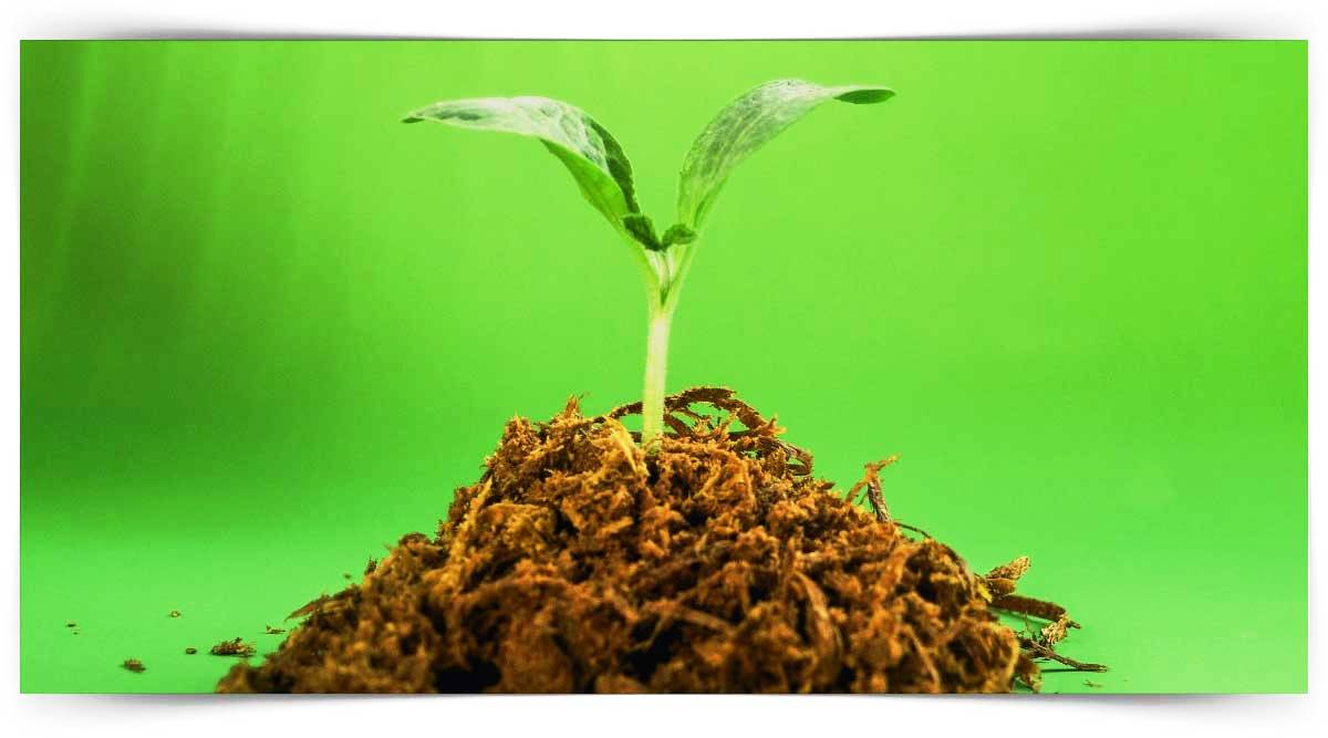 Meyve Fidan Üretimi Kursu MEB Onaylı