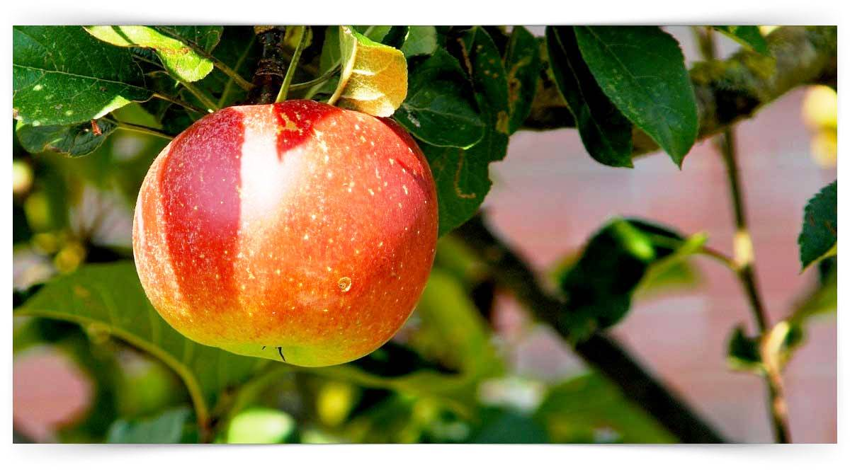 Meyve Yetiştiricisi Kursu MEB Onaylı