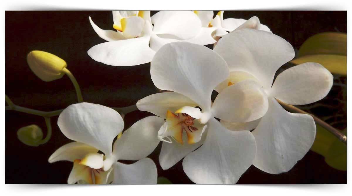 Orkide Yetiştiriciliği Kursu MEB Onaylı