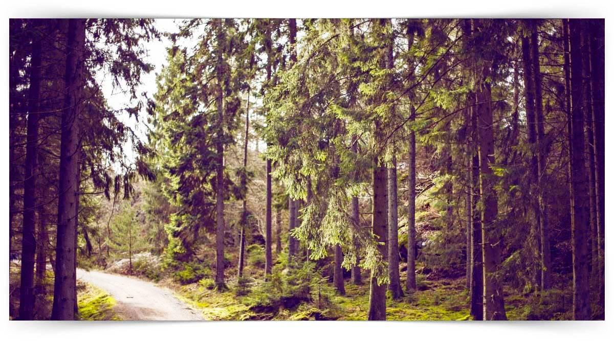 Orman Emvali Üretim İşçiliği Kursu MEB Onaylı