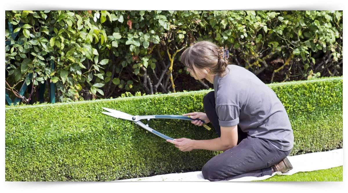 Park, Bahçe Ve Koruların Bakımı Elemanı Kursu MEB Onaylı