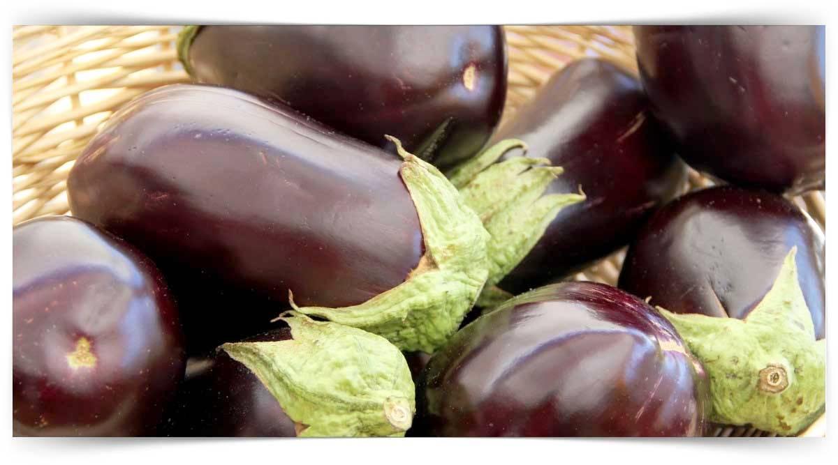 Patlıcan Yetiştiriciliği Kursu MEB Onaylı