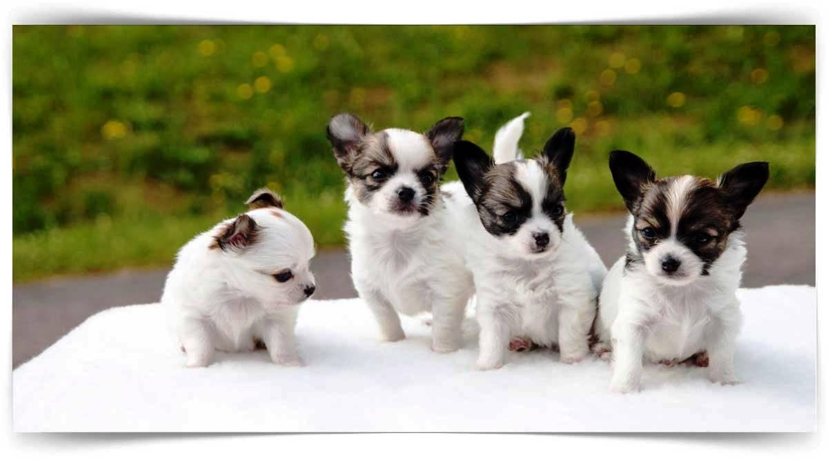 Pet Hayvanları Kursu MEB Onaylı