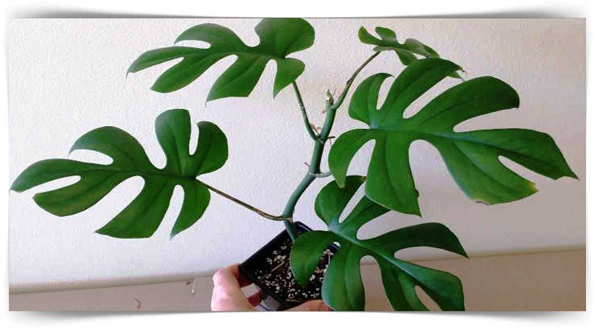 Raphydophora Yetiştiriciliği Kursu MEB Onaylı