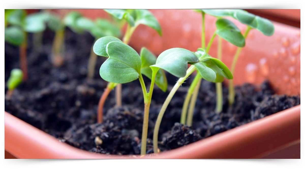 Sebze Fidesi Üretimi Kursu MEB Onaylı