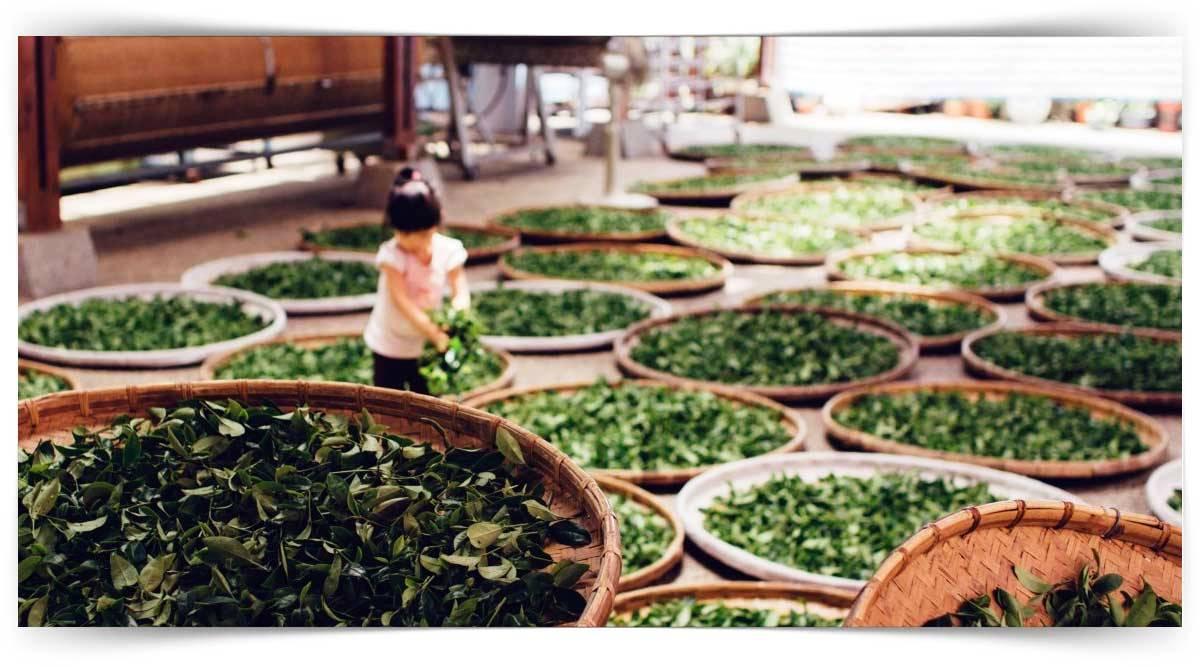 Sebze Ve Meyve İşleme Elemanı Kursu MEB Onaylı