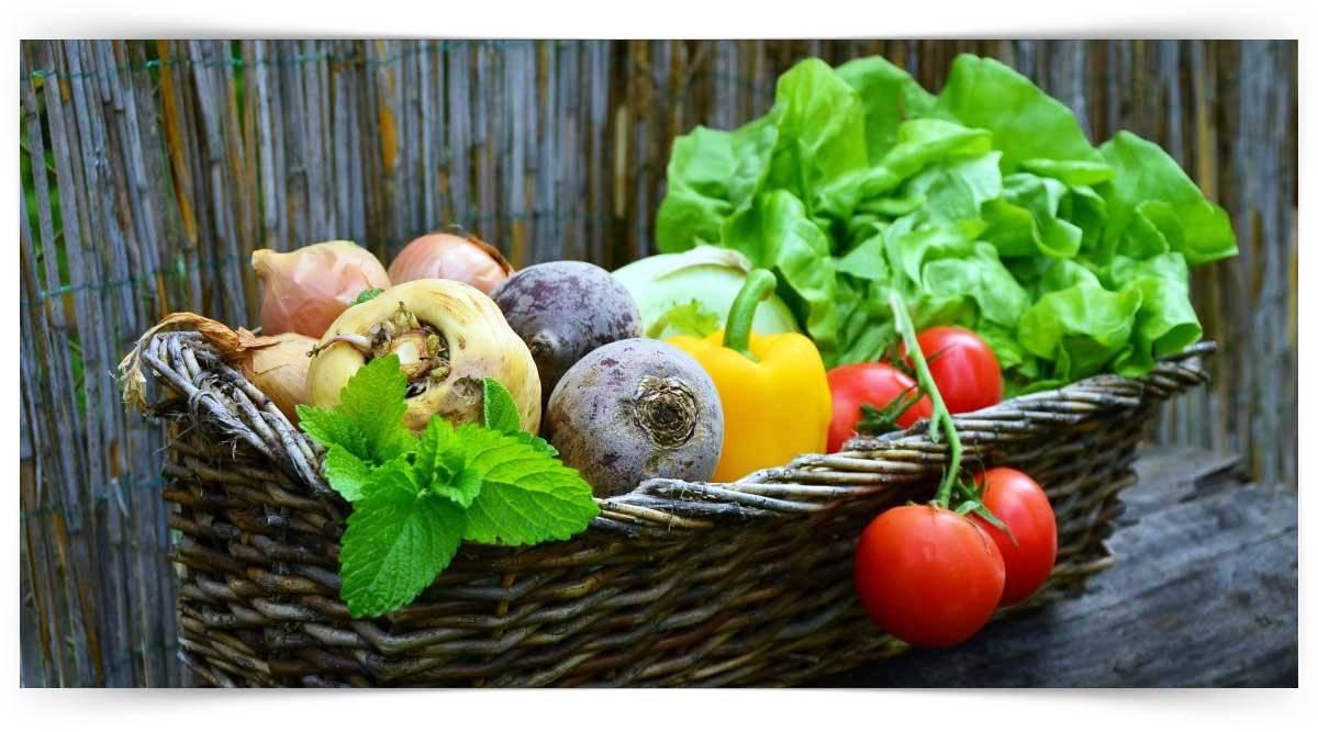 Sebze Yetiştiriciliği Kursu MEB Onaylı