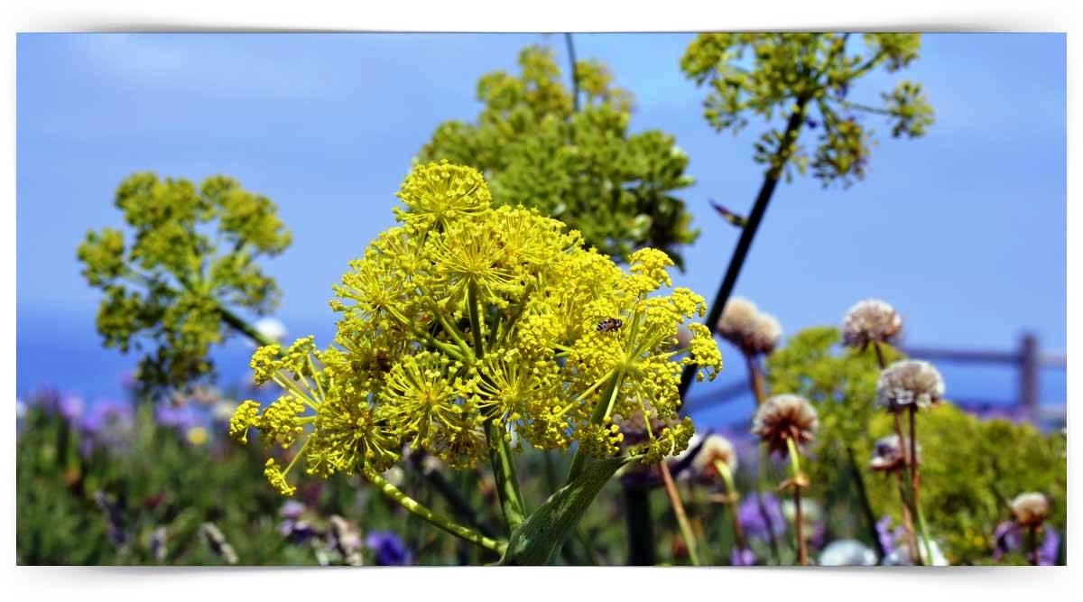 Şemsiye Çiçekli Sebzeler Yetiştiriciliği Kursu MEB Onaylı