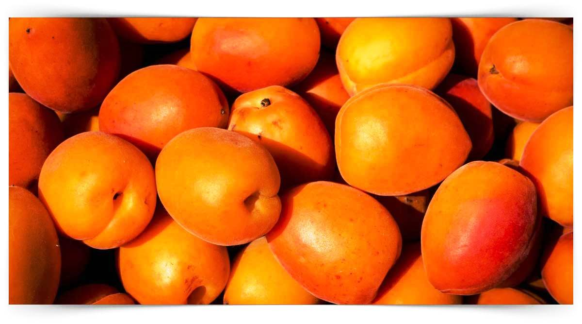 Sert Çekirdekli Meyve Yetiştiriciliği Kursu MEB Onaylı