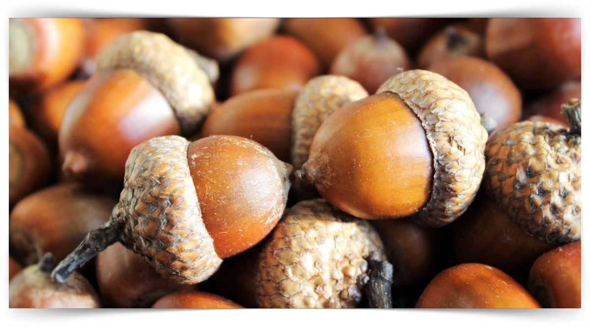 Sert Kabuklu Meyve Yetiştiriciliği Kursu MEB Onaylı