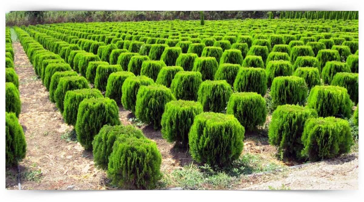 Süs Ağaççıkları Yetiştiriciliği Kursu MEB Onaylı