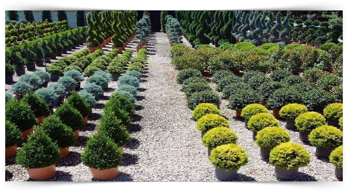 Süs Ağaçları Yetiştiriciliği Kursu MEB Onaylı