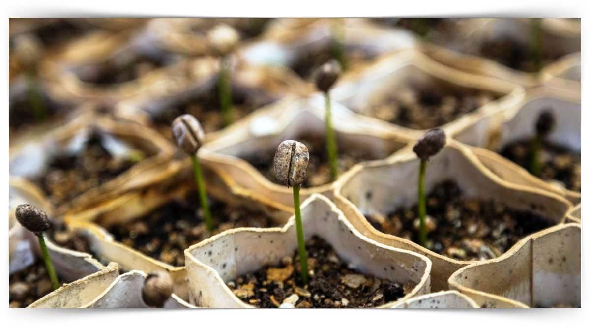 Süs Bitkileri Fidesi Yetiştiriciliği Kursu MEB Onaylı