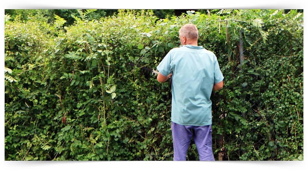 Süs Bitkilerinde Budama Kursu MEB Onaylı