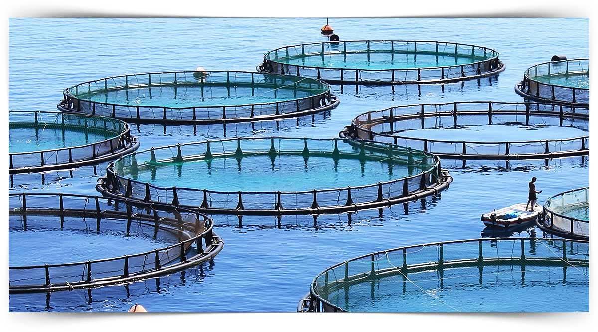 Tatlı Su Balıkları Üreticisi Kursu MEB Onaylı