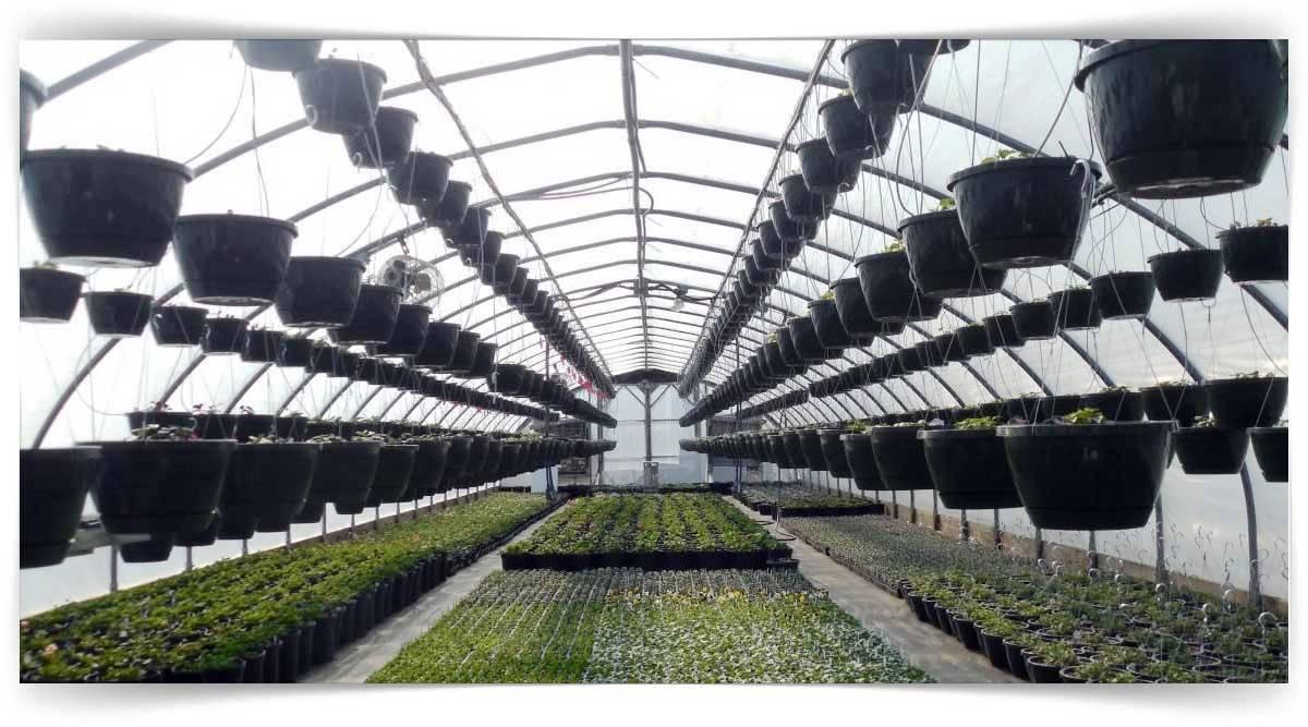Temel Dış Mekân Bitkileri Yetiştiriciliği Kursu MEB Onaylı