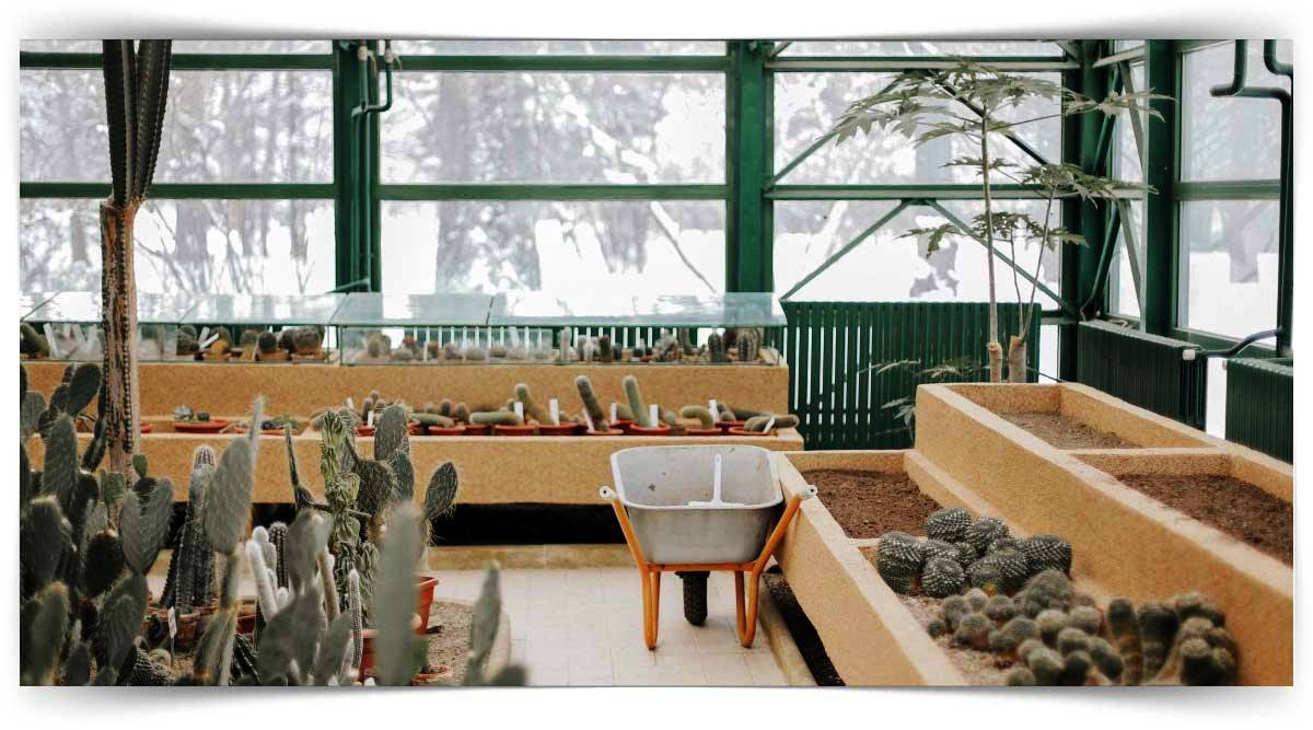 Temel İç Mekan Bitkileri Yetiştiriciliği Kursu MEB Onaylı