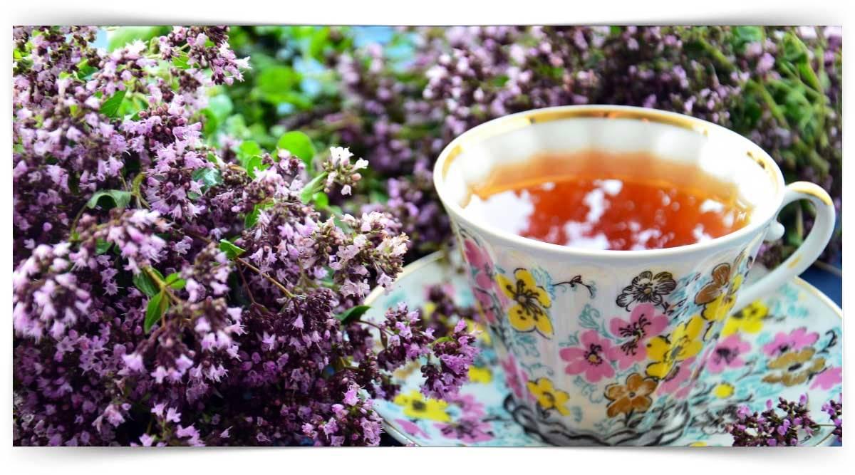 Tıbbi Ve Aromatik Bitki Yetiştiriciliği Kursu MEB Onaylı