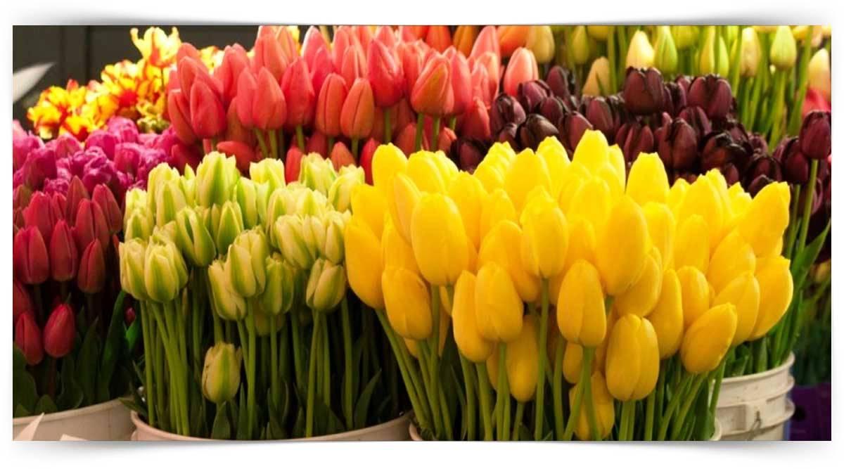 Tohumla Üretilen Kesme Çiçek Yetiştiriciliği Kursu MEB Onaylı