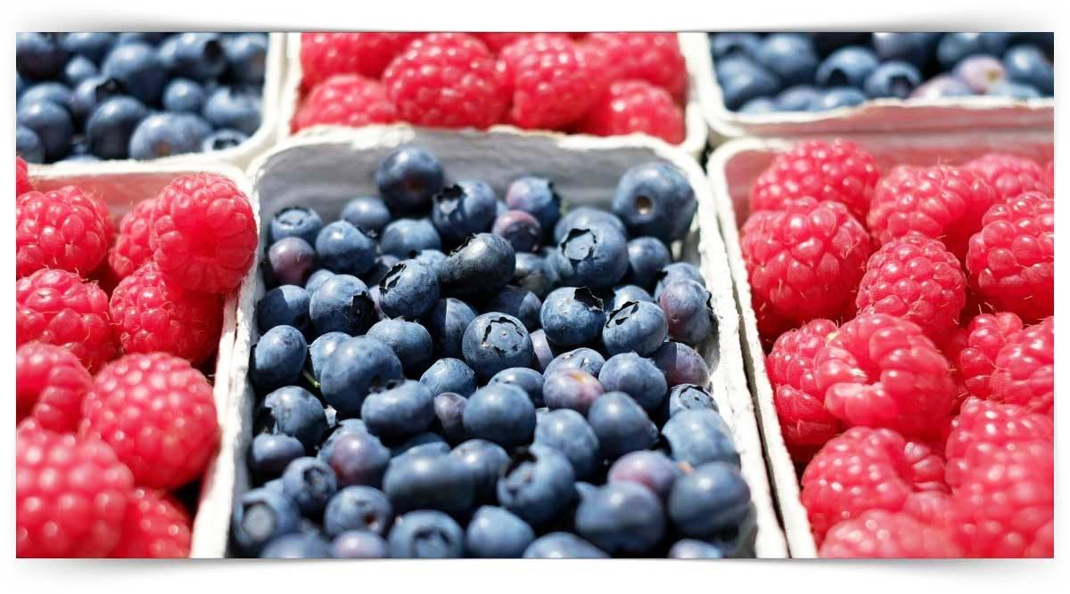 Üzümsü Meyve Yetiştiriciliği Kursu MEB Onaylı