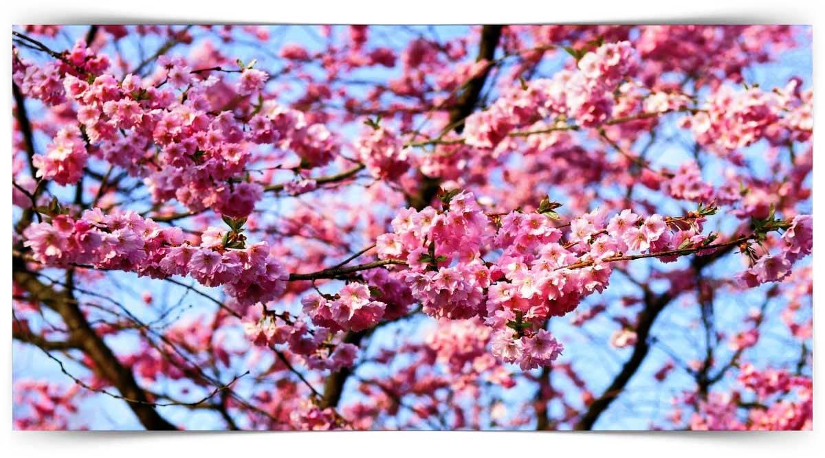 Yaprağını Döken Süs Ağaçları Yetiştiriciliği Kursu MEB Onaylı