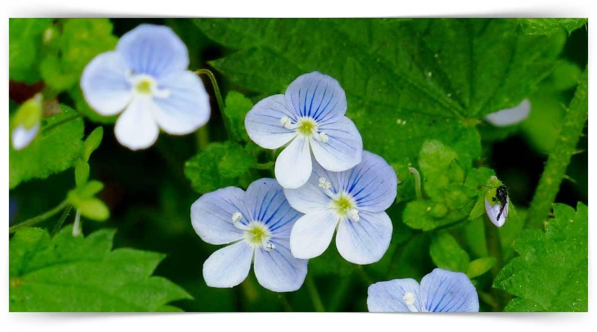Yapraklarından Faydalanılan İlaç Ve Baharat Bitkileri Yetiştiriciliği Kursu MEB Onaylı
